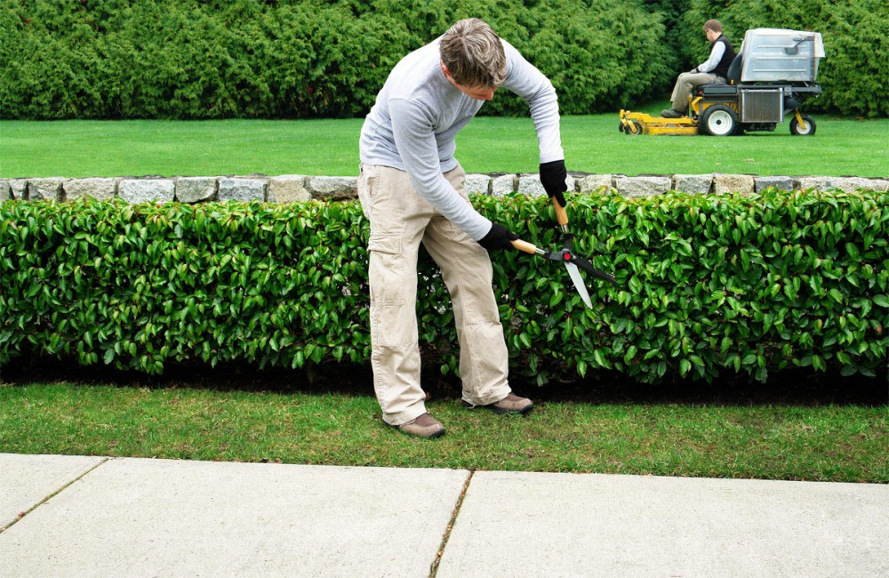 Service la personne paganelli auclair paysagiste par for Entretien de jardin service a la personne