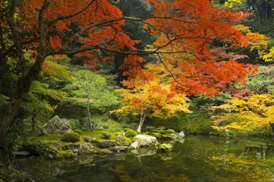 fond_automne